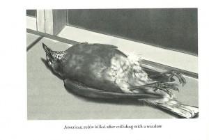 subirdia bird watching