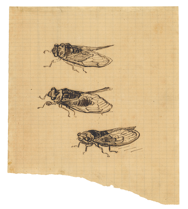 Three cicadas, Ever Yours, Vincent van Gogh